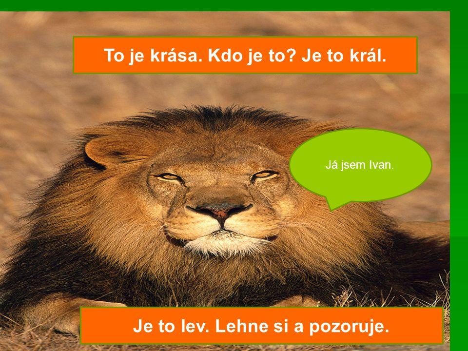 To je krása. Kdo je to? Je to král. Je to lev. Lehne si a pozoruje. Já jsem Ivan.