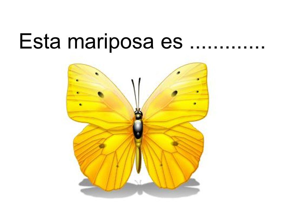 Esta mariposa es.............