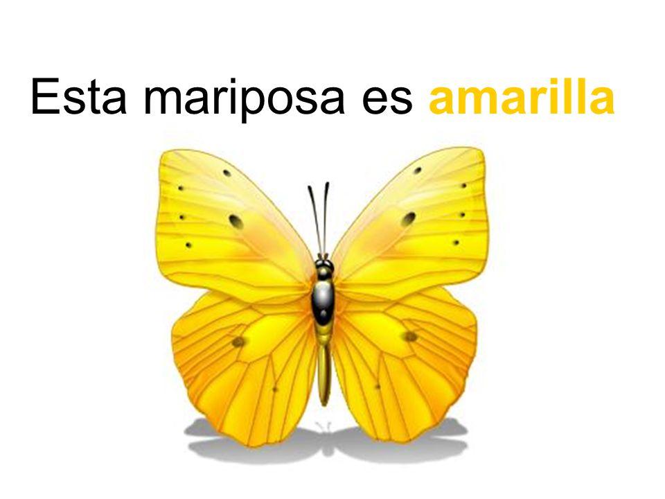 Esta mariposa es amarilla