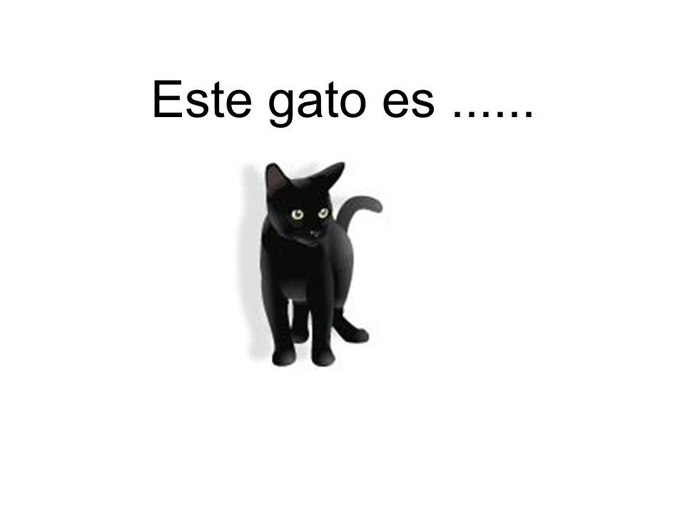 Este gato es......