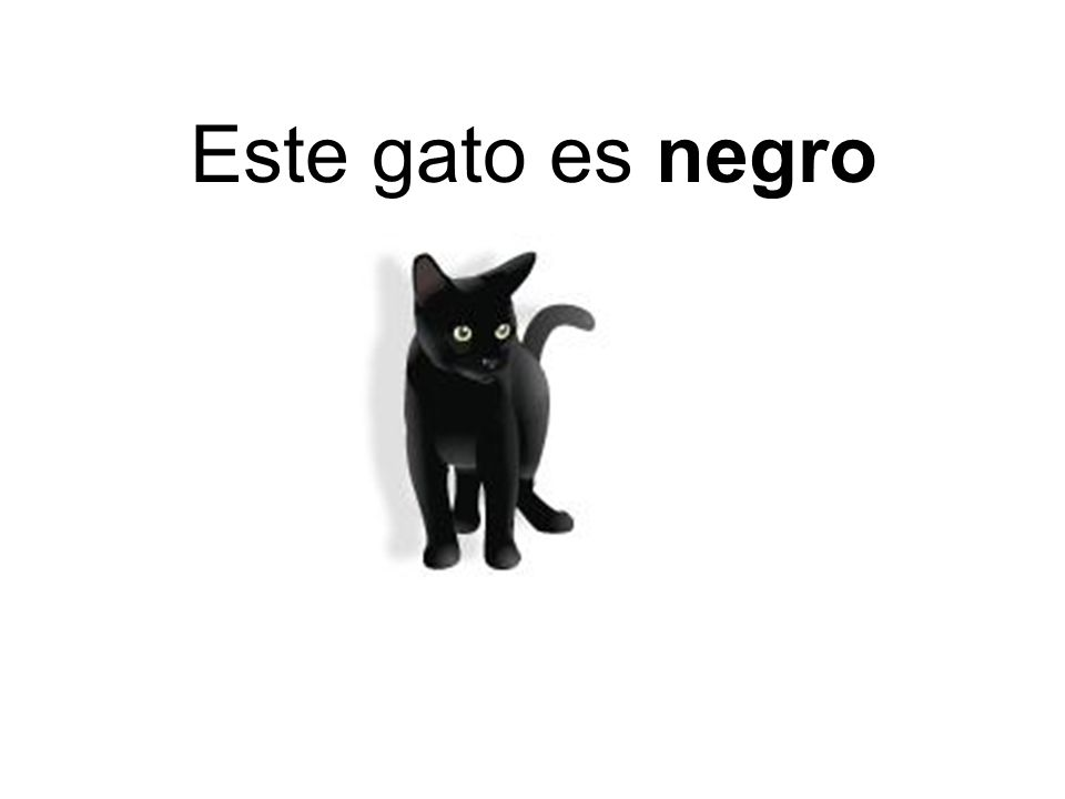 Este gato es negro