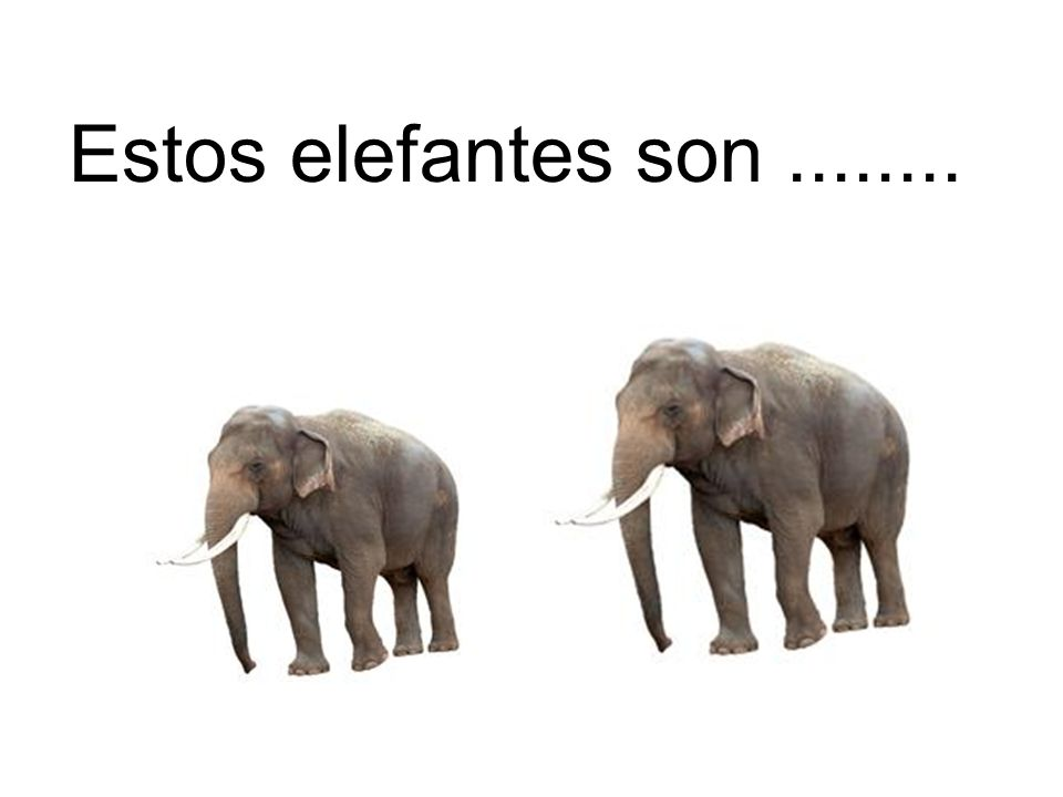 Estos elefantes son........