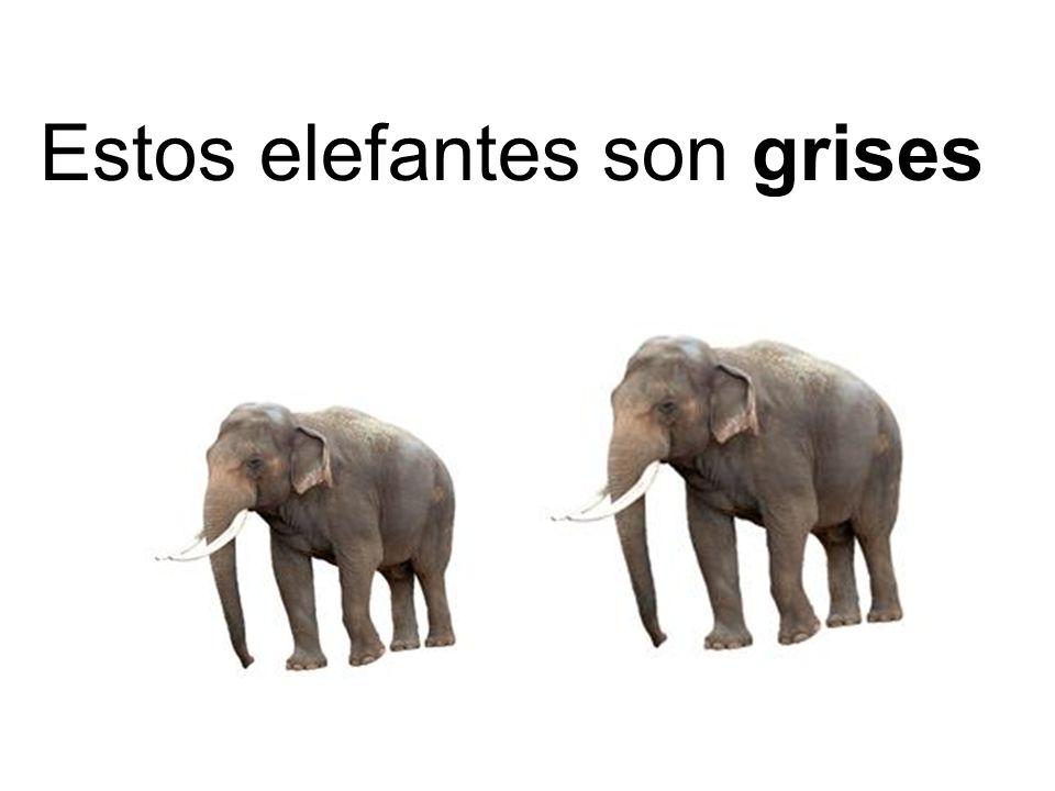 Estos elefantes son grises