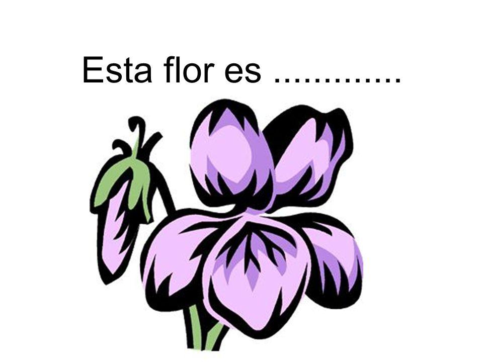 Esta flor es.............
