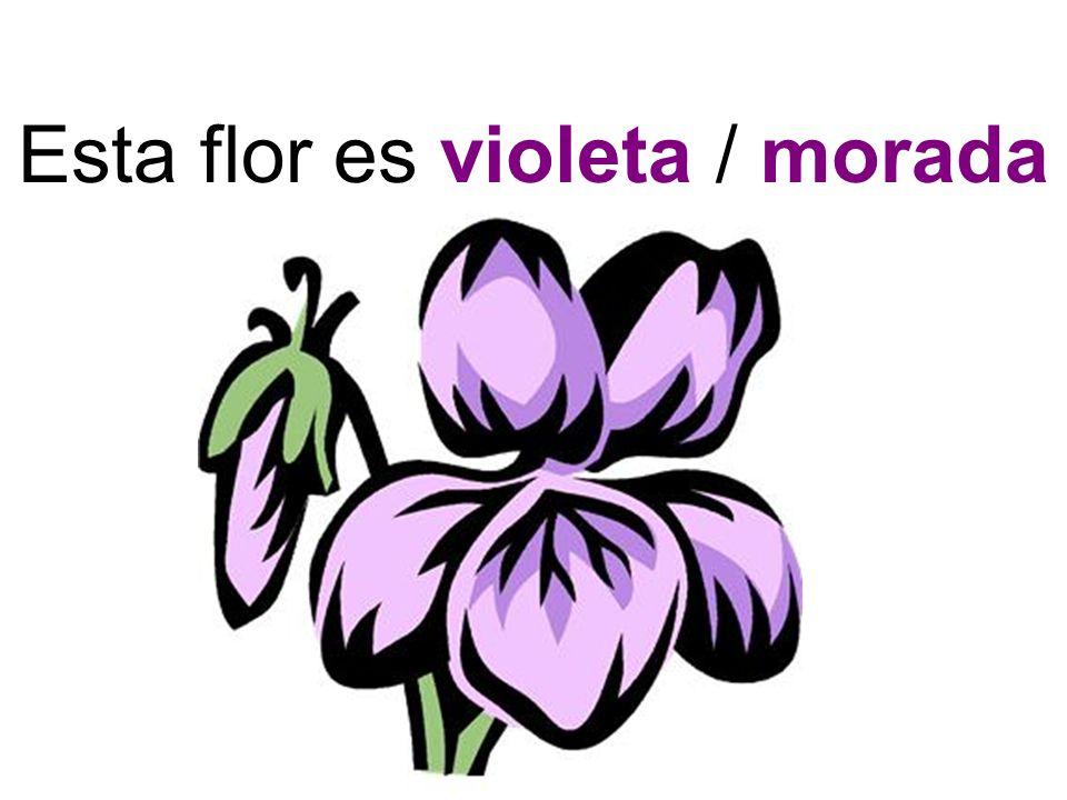 Esta flor es violeta / morada