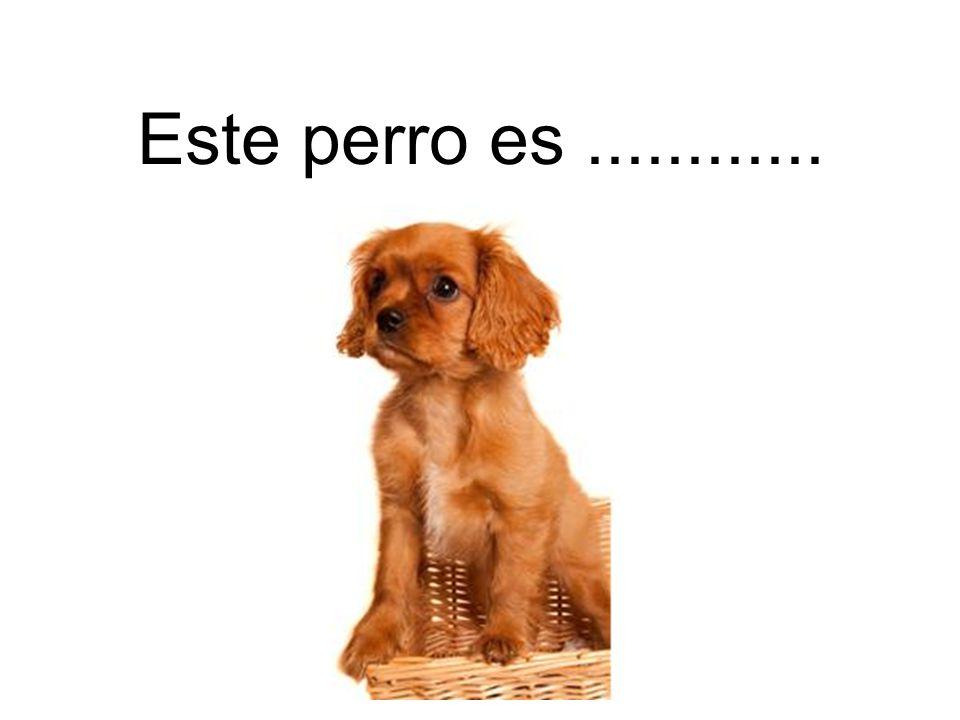 Este perro es............