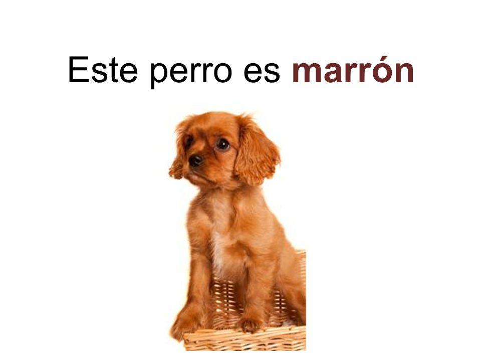 Este perro es marrón