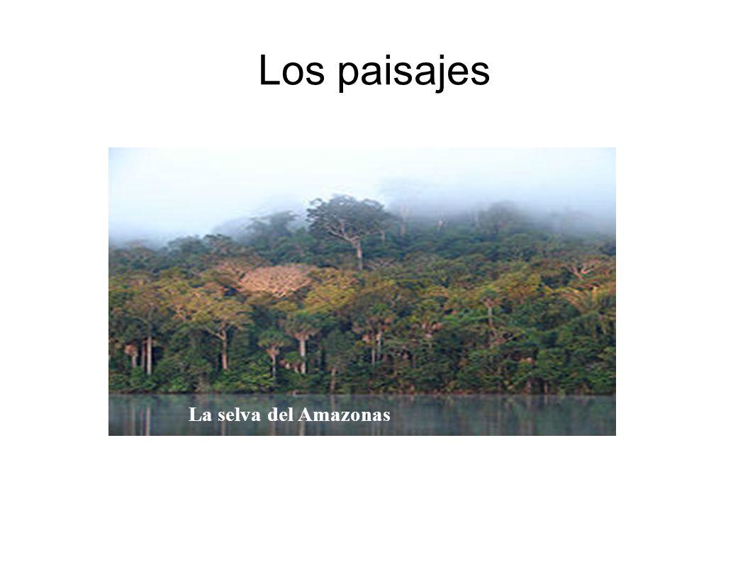 Los paisajes La selva del Amazonas