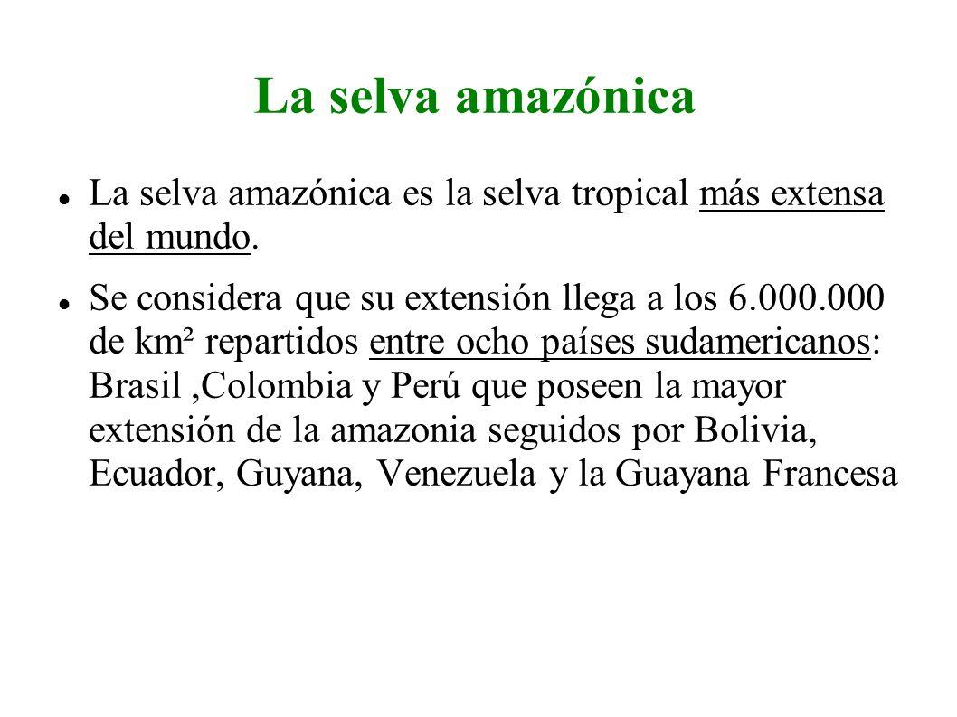 La selva amazónica La selva amazónica es la selva tropical más extensa del mundo. Se considera que su extensión llega a los 6.000.000 de km² repartido