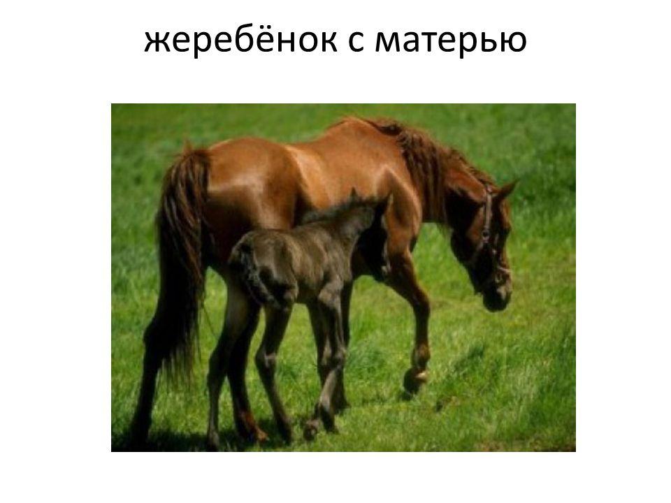 жеребёнок с матерью