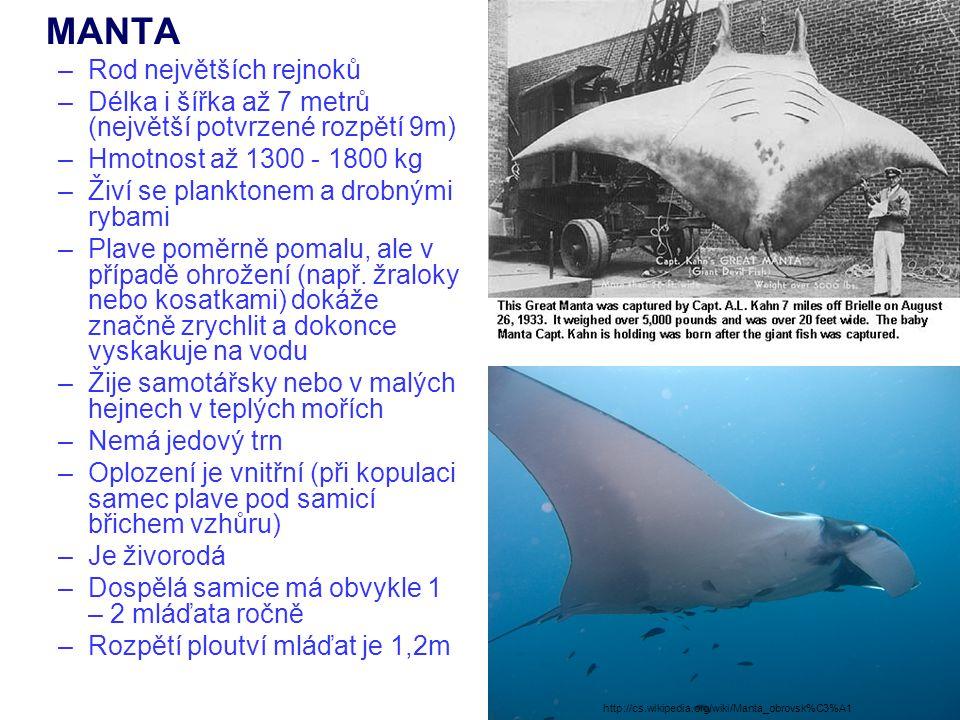 MANTA –Rod největších rejnoků –Délka i šířka až 7 metrů (největší potvrzené rozpětí 9m) –Hmotnost až 1300 - 1800 kg –Živí se planktonem a drobnými ryb