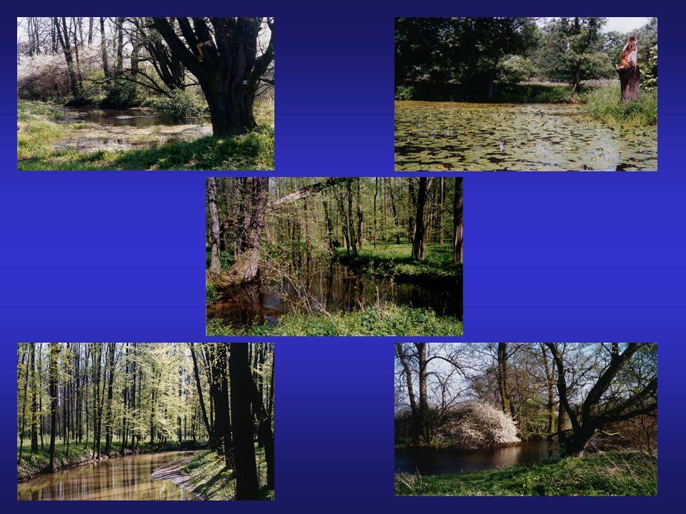POPIS TŮNÍ A - periodická luční tůň, 0-150 cm, ryby jen krátce, pokrytí okřehkem B - trvalá luční tůň, 50-200 cm, slabě průtočný kanál, pokrytí stulíkem C - periodická lesní tůň, 0-150 cm, silné zastínění, bez ryb D - trvalá lesní tůň, 100-250 cm, slabě průtočný kanál E - trvalá luční tůň, 150-300 cm, pokrytí stulíkem + bohatá submerzní vegetace