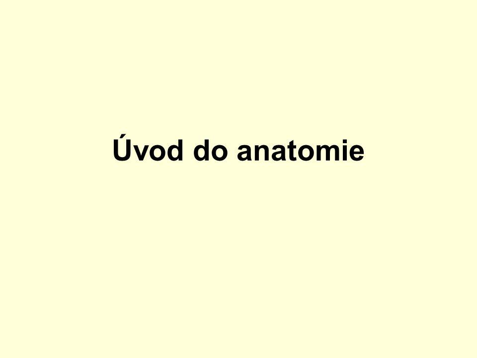 Anatomie je součástí vědy o životě – biologie.