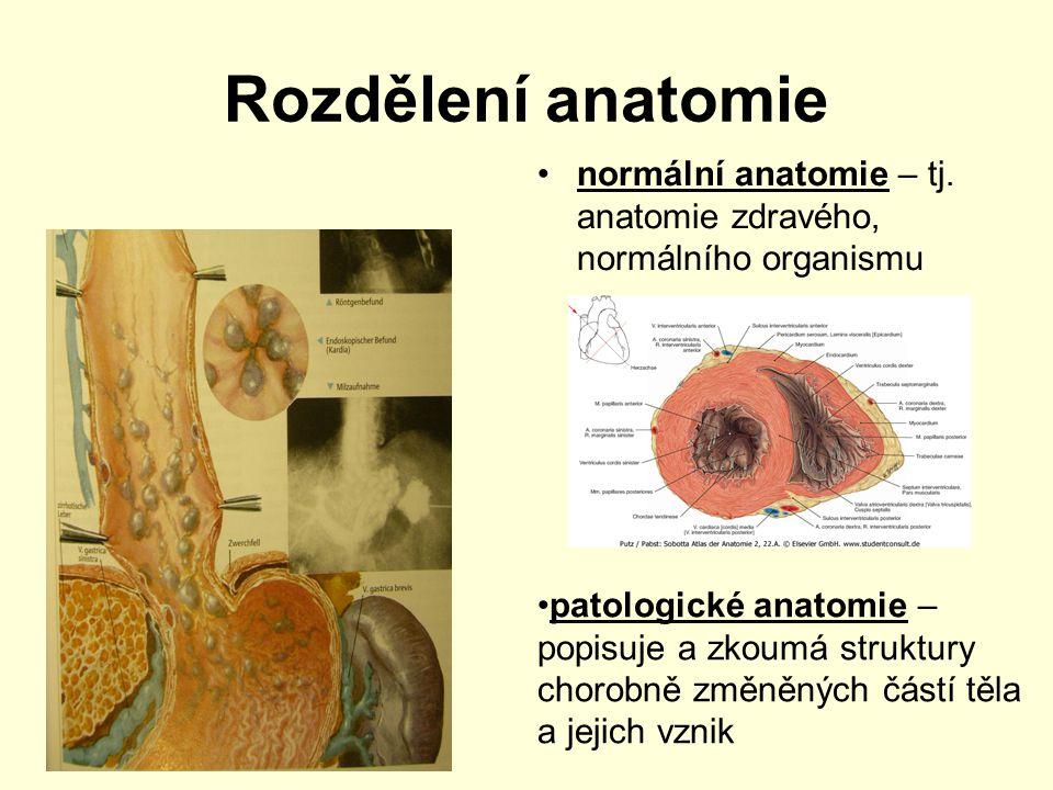 Rozdělení anatomie anatomie makroskopická – prostým okem anatomie mikroskopické – využívá mikroskop –histologie – nauka o tkáních –cytologie – studium buněk