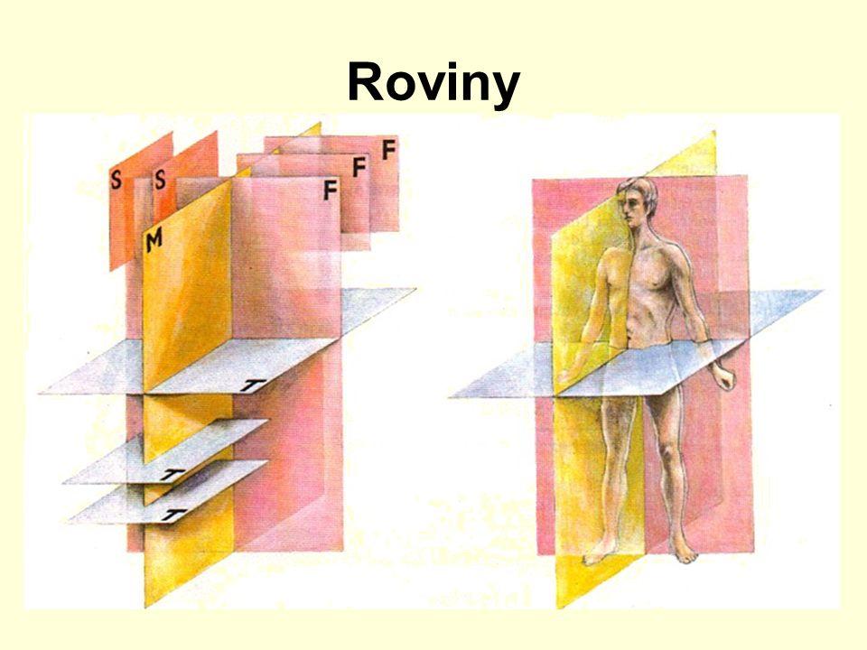"""základní anatomické postavení rovina mediánní – dělí tělo na dvě souměrné poloviny (pravou a levou) roviny sagitální – rovnoběžné s rovinou mediánní roviny transverzální – kolmé na sagitální, = horizontální, příčné, """"dělí tělo na horní a dolní části roviny frontální – kolmé na předchozí, rovnoběžné s čelem, """"dělí tělo na přední a zadní části"""