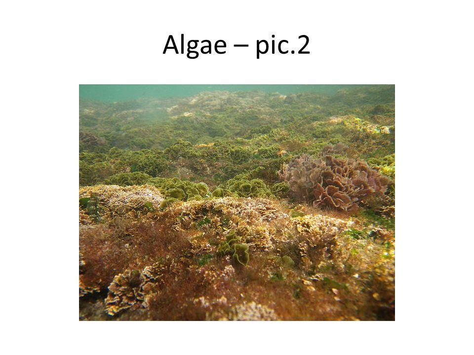 Algae – pic.2