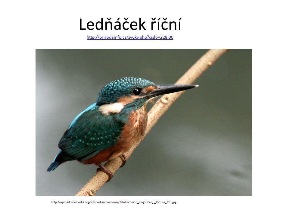 Ledňáček říční http://prirodainfo.cz/zvuky.php?cislo=228.00 http://prirodainfo.cz/zvuky.php?cislo=228.00 http://upload.wikimedia.org/wikipedia/commons