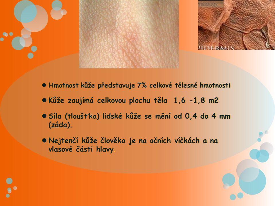 Kůže Pokožka Škára Podkožní vazivo