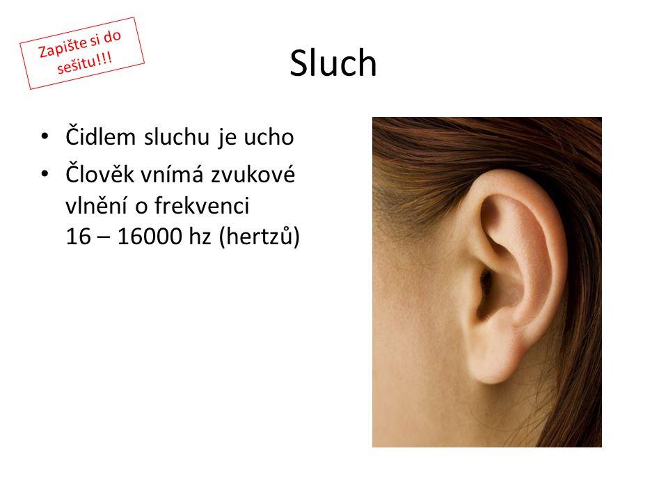 Sluch Čidlem sluchu je ucho Člověk vnímá zvukové vlnění o frekvenci 16 – 16000 hz (hertzů) Zapište si do sešitu!!!
