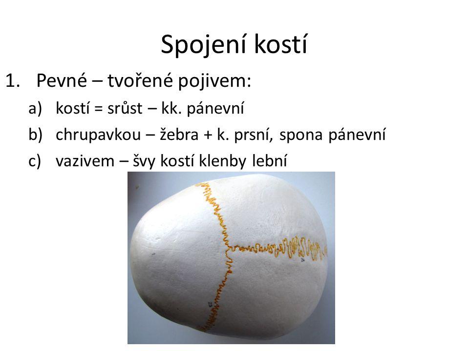 Spojení kostí 2.Pohyblivé – kloub kloubní pouzdro synoviální vrstva kloubní chrupavka