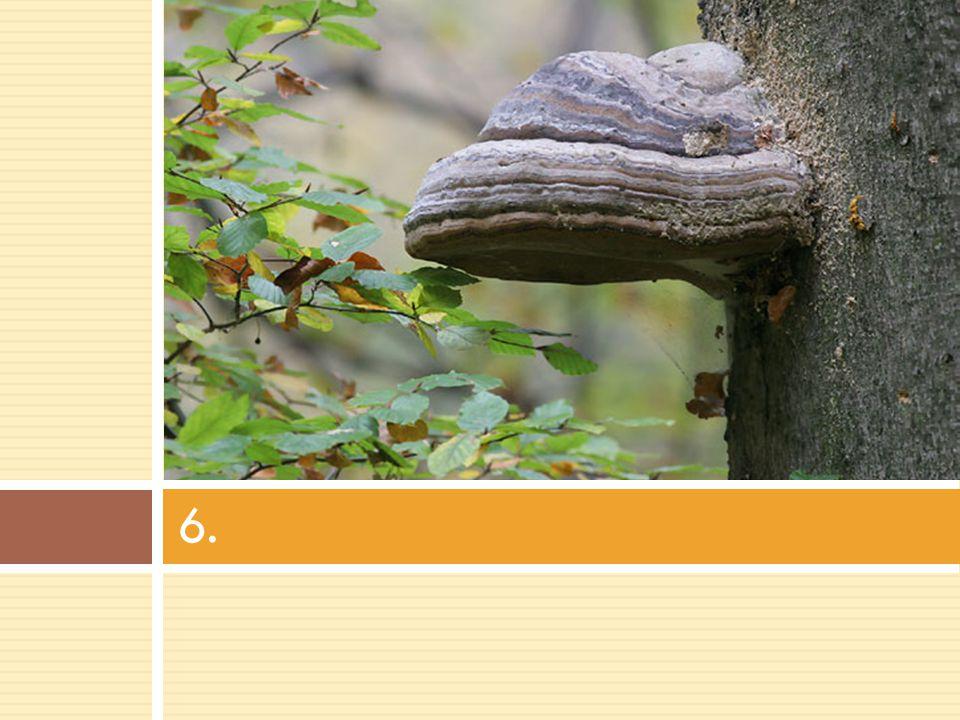 ŘEŠENÍ: 1.Liška obecná 2. Klouzek sličný 3. Muchomůrka červená 4.