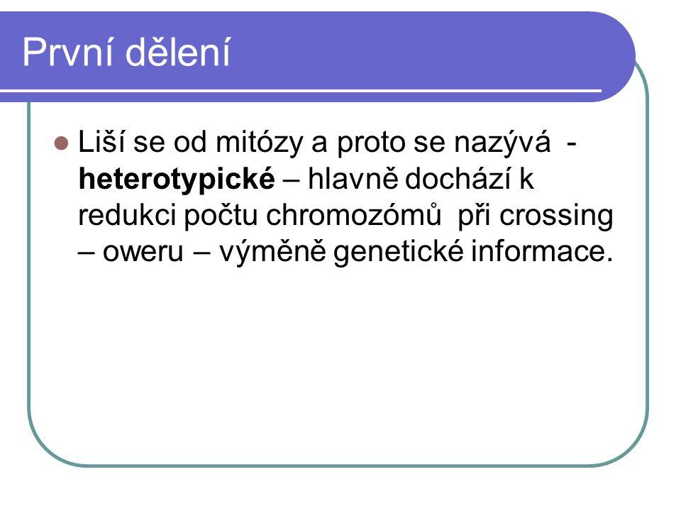 První dělení Liší se od mitózy a proto se nazývá - heterotypické – hlavně dochází k redukci počtu chromozómů při crossing – oweru – výměně genetické informace.
