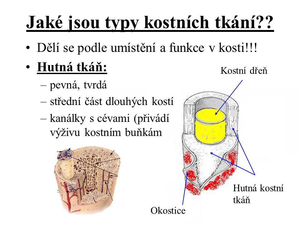 Dělí se podle umístění a funkce v kosti!!! Hutná tkáň: –pevná, tvrdá –střední část dlouhých kostí –kanálky s cévami (přivádí výživu kostním buňkám Kos