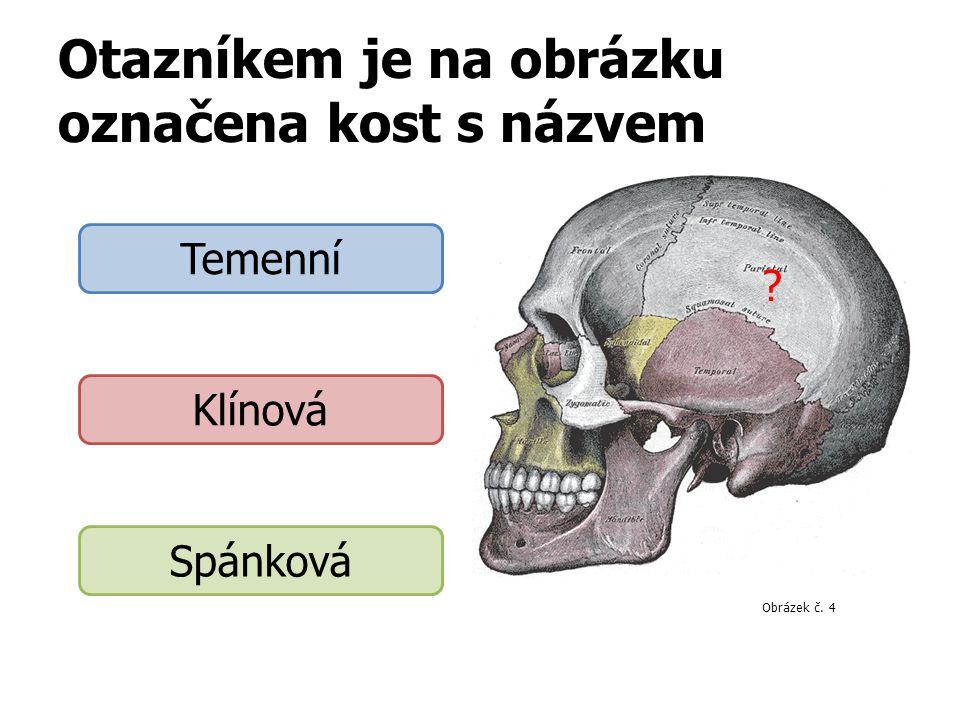 Otazníkem je na obrázku označena kost s názvem Temenní Klínová Spánková Obrázek 4 ? Obrázek č. 4