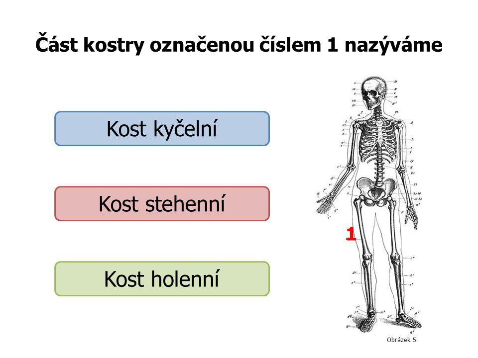 Část kostry označenou číslem 1 nazýváme 1 Kost kyčelní Kost stehenní Kost holenní Obrázek 5