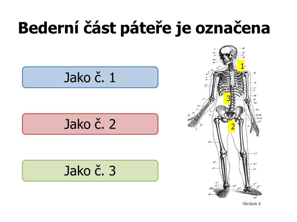 Bederní část páteře je označena 1 3 2 Jako č. 1 Jako č. 2 Jako č. 3 Obrázek 6