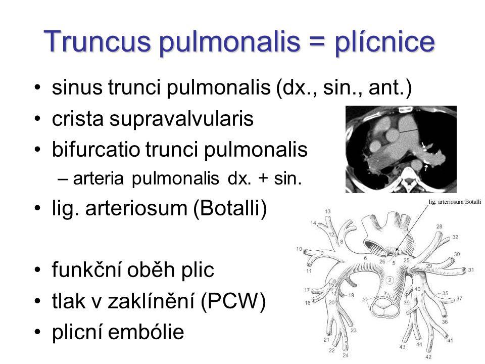 sinus trunci pulmonalis (dx., sin., ant.) crista supravalvularis bifurcatio trunci pulmonalis –arteria pulmonalis dx. + sin. lig. arteriosum (Botalli)