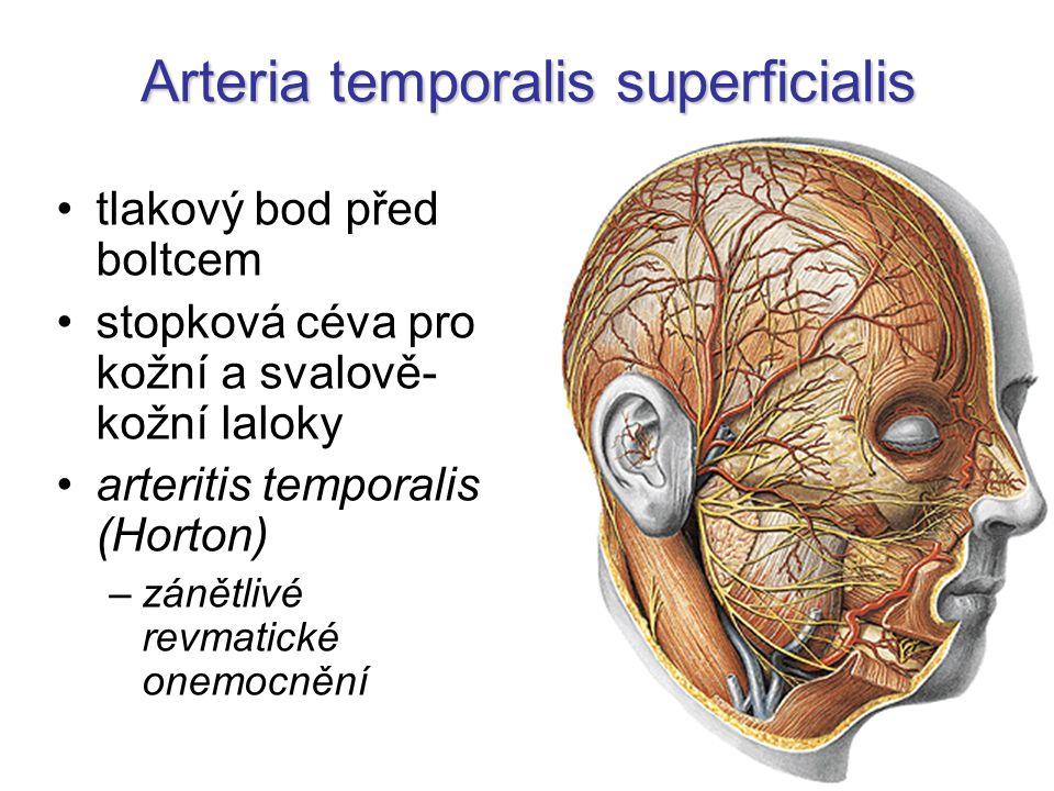 Arteria temporalis superficialis tlakový bod před boltcem stopková céva pro kožní a svalově- kožní laloky arteritis temporalis (Horton) –zánětlivé rev