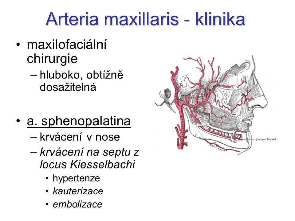 Arteria maxillaris - klinika maxilofaciální chirurgie –hluboko, obtížně dosažitelná a. sphenopalatina –krvácení v nose –krvácení na septu z locus Kies