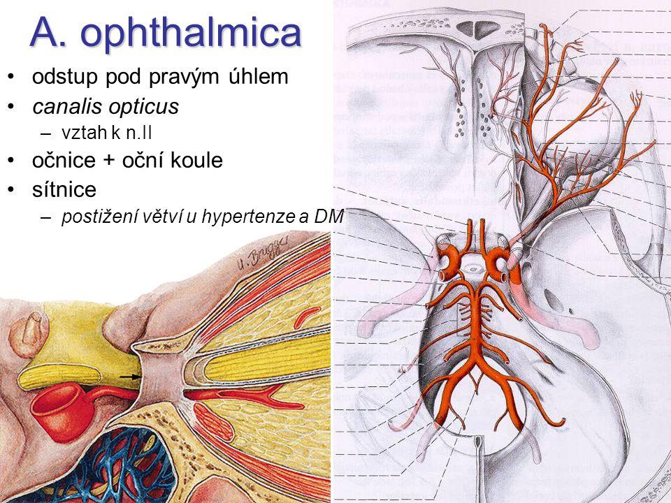 A. ophthalmica odstup pod pravým úhlem canalis opticus –vztah k n.II očnice + oční koule sítnice –postižení větví u hypertenze a DM