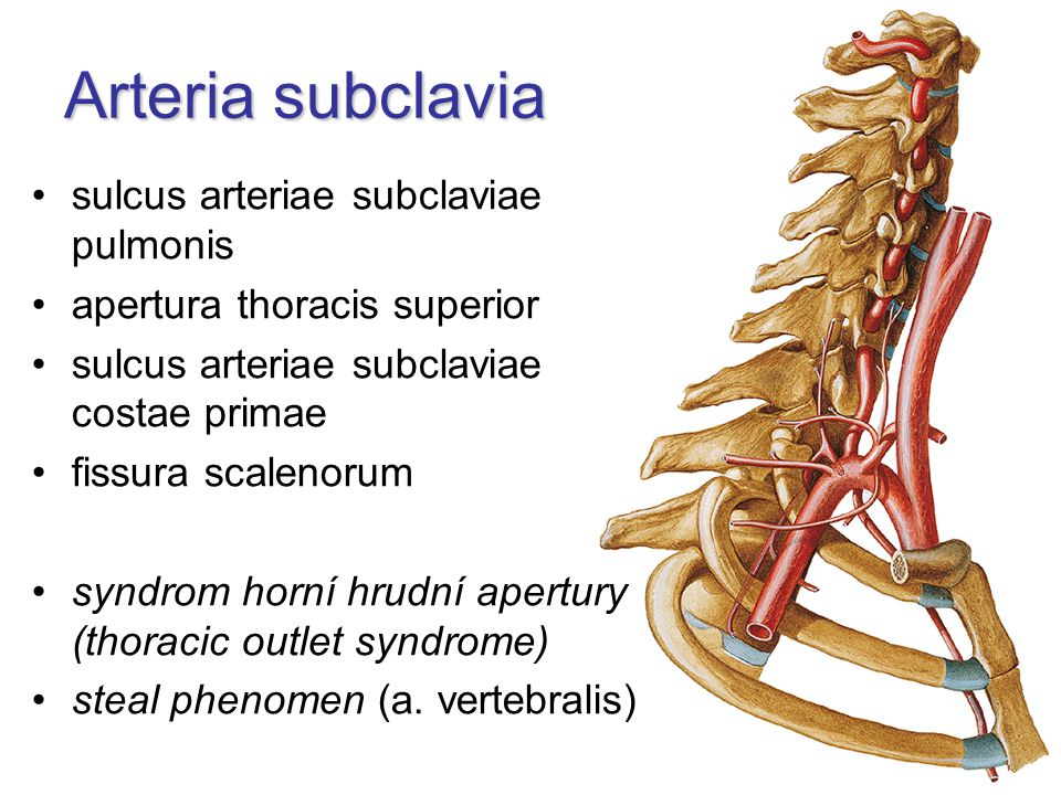 Arteria subclavia sulcus arteriae subclaviae pulmonis apertura thoracis superior sulcus arteriae subclaviae costae primae fissura scalenorum syndrom horní hrudní apertury (thoracic outlet syndrome) steal phenomen (a.