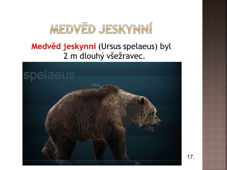 Medvěd jeskynní (Ursus spelaeus) byl 2 m dlouhý všežravec. 17.
