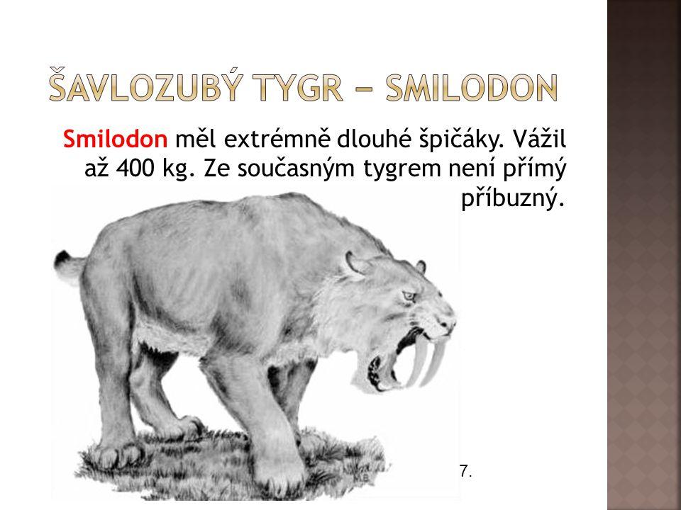 Smilodon měl extrémně dlouhé špičáky. Vážil až 400 kg. Ze současným tygrem není přímý příbuzný. 7.