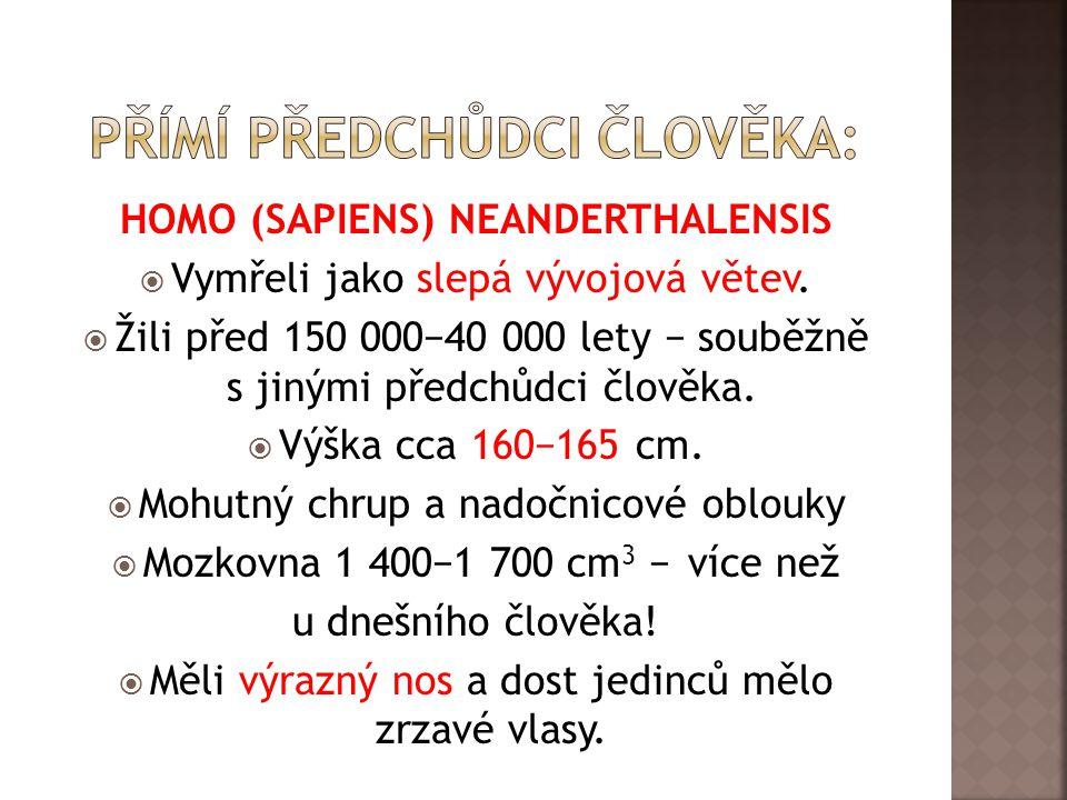 HOMO (SAPIENS) NEANDERTHALENSIS  Vymřeli jako slepá vývojová větev.
