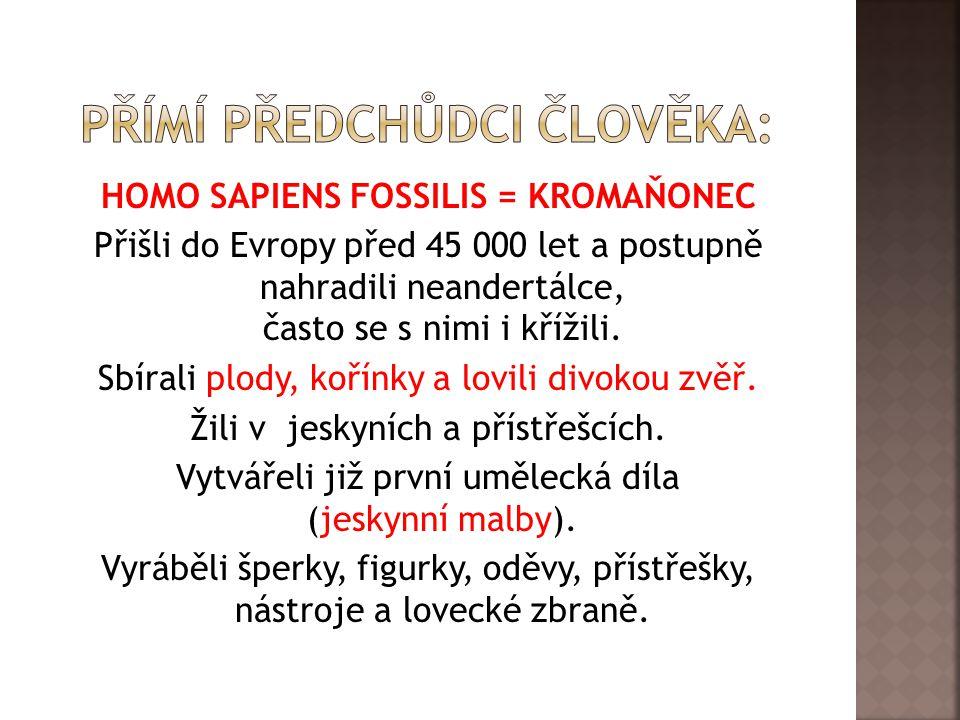 HOMO SAPIENS FOSSILIS = KROMAŇONEC Přišli do Evropy před 45 000 let a postupně nahradili neandertálce, často se s nimi i křížili.