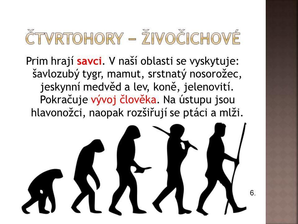 AEGYPTOPITHECUS Je to nejstarší známý předchůdce člověka a antropoidních opic.