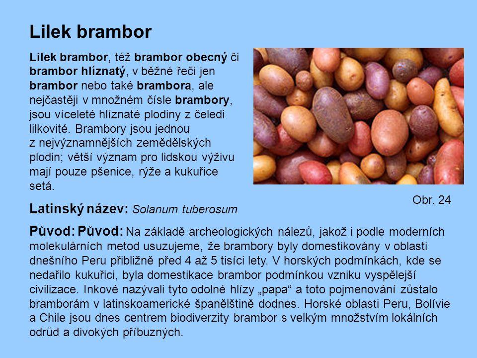 Lilek brambor Lilek brambor, též brambor obecný či brambor hlíznatý, v běžné řeči jen brambor nebo také brambora, ale nejčastěji v množném čísle bramb