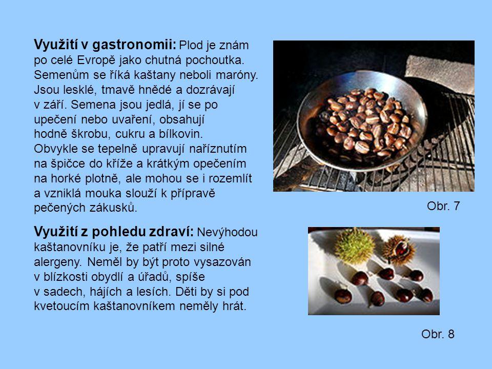 Využití v gastronomii: Plod je znám po celé Evropě jako chutná pochoutka. Semenům se říká kaštany neboli maróny. Jsou lesklé, tmavě hnědé a dozrávají
