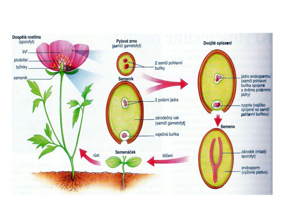 1.Jaké květy mají větrosnubné rostliny.  Drobné, nenápadné bez vůně a nektaru.