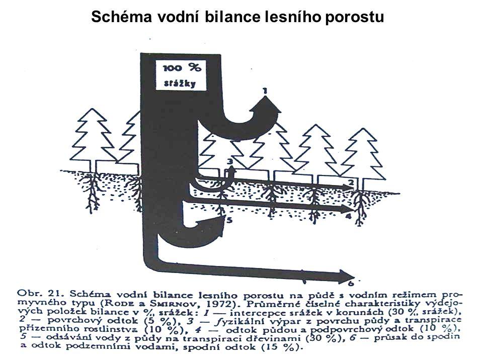Schéma vodní bilance lesního porostu