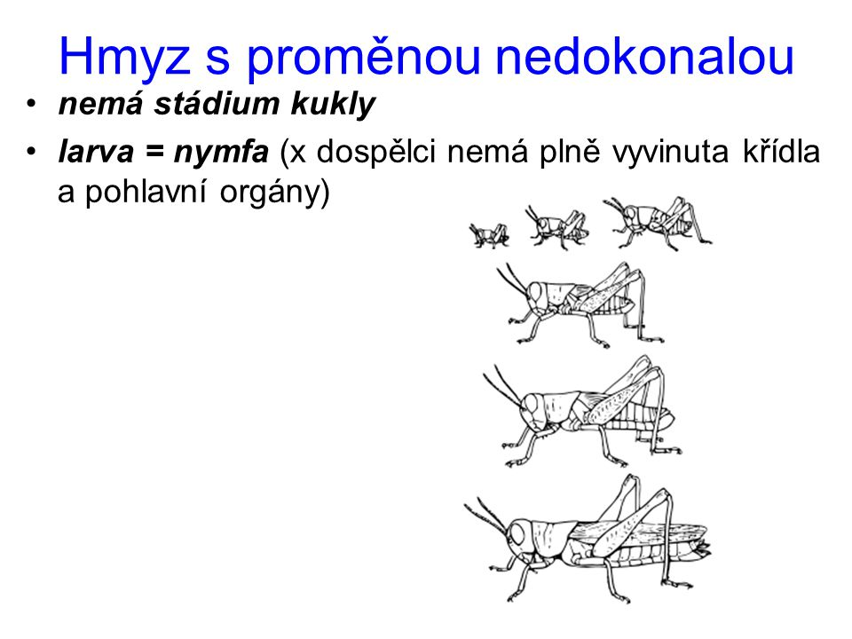 Hmyz s proměnou nedokonalou nemá stádium kukly larva = nymfa (x dospělci nemá plně vyvinuta křídla a pohlavní orgány)