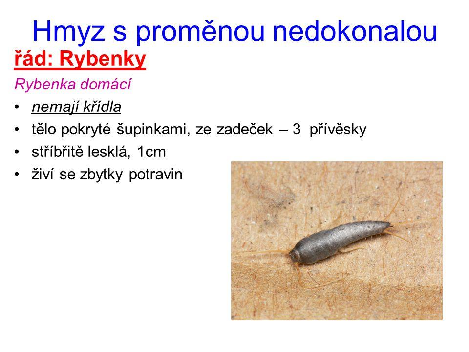 Hmyz s proměnou nedokonalou řád: Rybenky Rybenka domácí nemají křídla tělo pokryté šupinkami, ze zadeček – 3 přívěsky stříbřitě lesklá, 1cm živí se zb