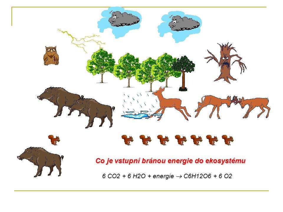 Co je vstupní bránou energie do ekosystému 6 CO2 + 6 H2O + energie  C6H12O6 + 6 O2