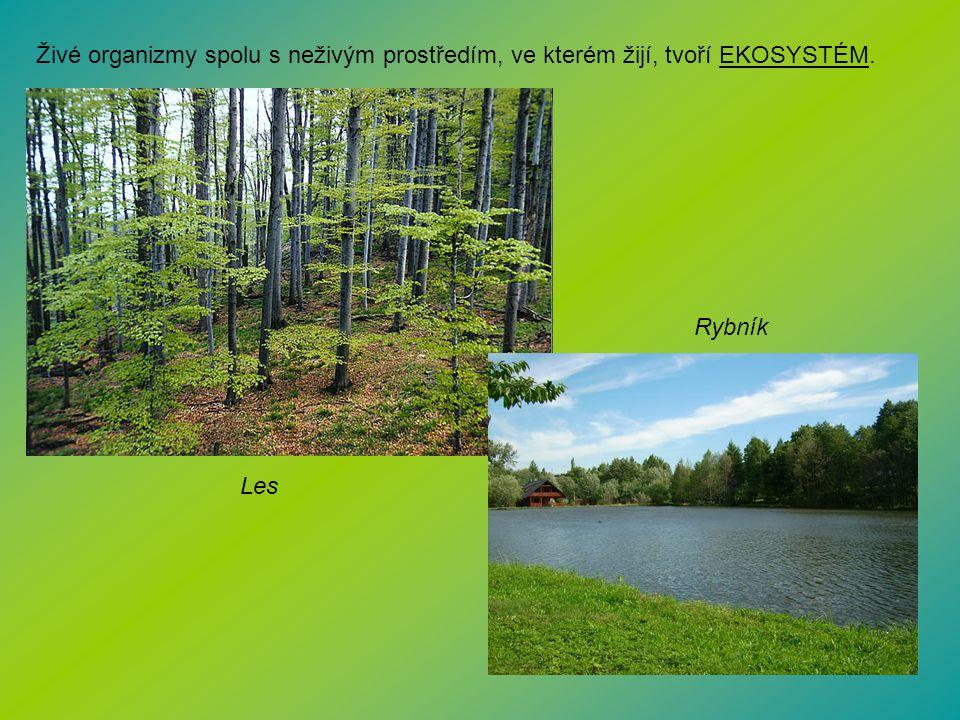 Živé organizmy spolu s neživým prostředím, ve kterém žijí, tvoří EKOSYSTÉM. Les Rybník
