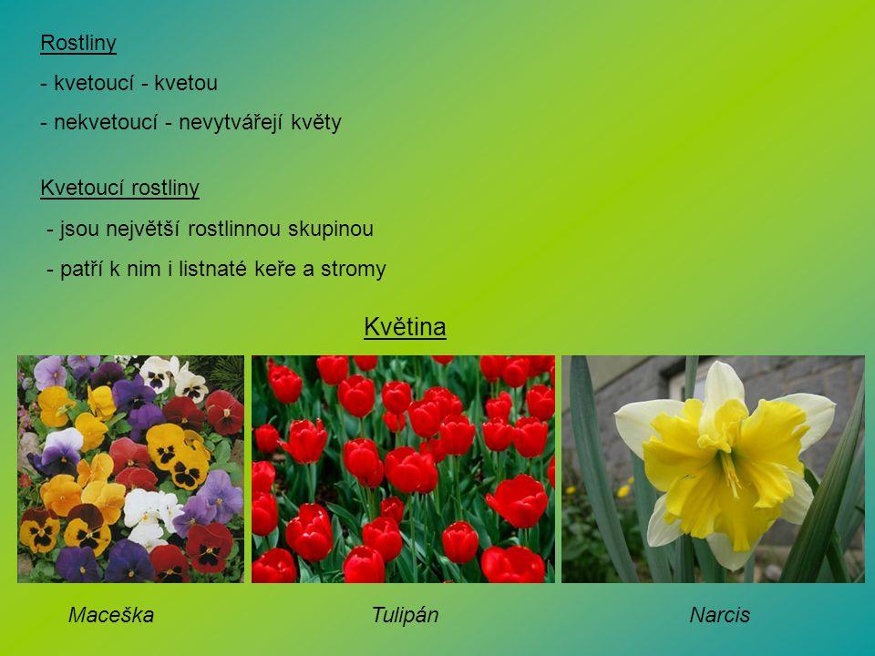Rostliny - kvetoucí - kvetou - nekvetoucí - nevytvářejí květy Kvetoucí rostliny - jsou největší rostlinnou skupinou - patří k nim i listnaté keře a st
