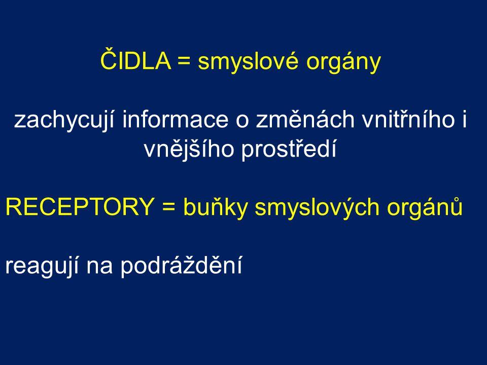 ČIDLA = smyslové orgány zachycují informace o změnách vnitřního i vnějšího prostředí RECEPTORY = buňky smyslových orgánů reagují na podráždění